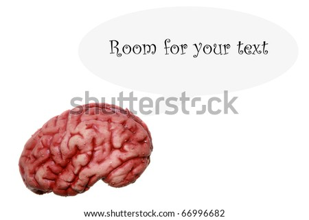 a human brain isolated on white with lots of room for your text or images or easily cropped out and used in other images