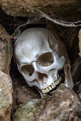 A Human skull in hole in stone wall. Abandoned skull among stones with cobwebs.