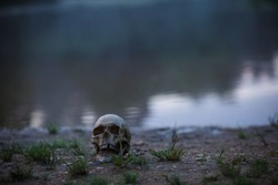 A human skull in the fog and twilight on the shore of a lake with tall grass. Horrible the concept of Halloween, scary skull layout at dusk.
