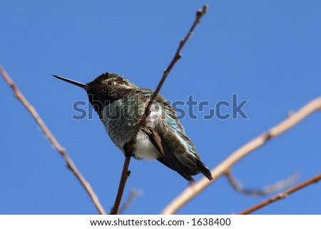 A humming bird resting on a tree branch.