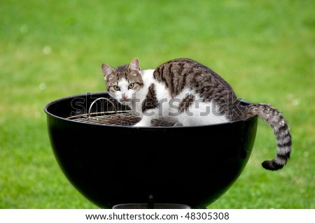 A hungry cat sitting on a barbecue grill looking
