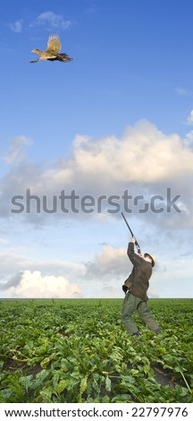 A hunter, aiming above his head at a pheasant hen, flying away in a sugar beet field
