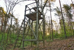 A hunter's seat in the forest near the Teufelsberg in Berlin. The late afternoon sun shines through the trees and towards the high seat.