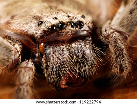 a huntsman spider up close - stock photo