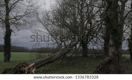 """A Hurricane called """"Franz"""" caused some damage in cologne/Germany"""