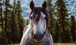 A Image Of Horse Stallion Equine