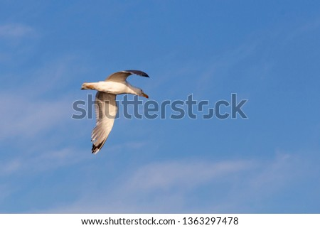 A Image of seabirds. Image of seagulls. #1363297478