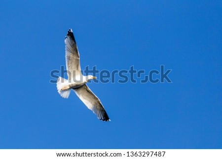A Image of seabirds. Image of seagulls. #1363297487