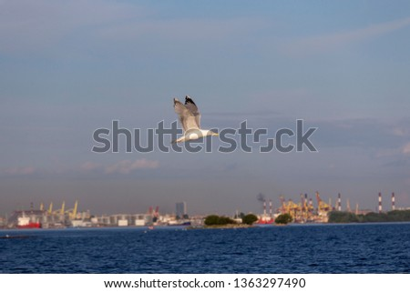 A Image of seabirds. Image of seagulls. #1363297490
