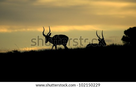 AFRICAN SILHOUETTE'S