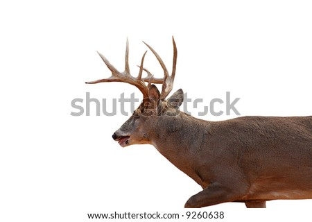 A isolated picture of a buck deer taken in a forest in indiana