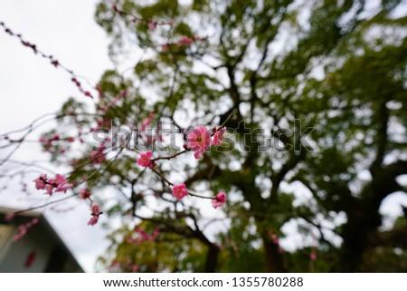 A Japanese Garden #1355780288