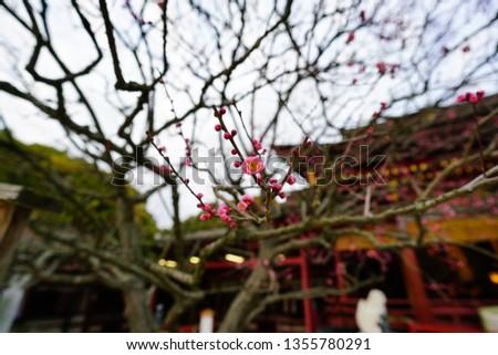A Japanese Garden #1355780291