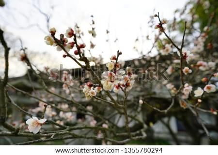 A Japanese Garden #1355780294