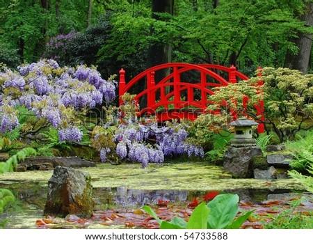 A japanese garden in spring