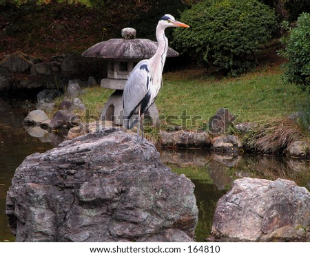 A Japanese garden with rocks,pond and bird-Maruyama Park-Kyoto