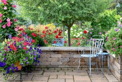A Japanese Variegated ornamental willow tree along with Red mandevilla, red roses, red geraniums, purple petunias are backdrop for this tranquil patio view in a Midwest garden