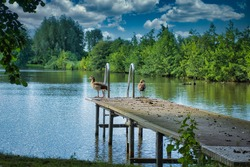 A jetty that leads into a lake. There are two geese on the dock. There are trees in the background.