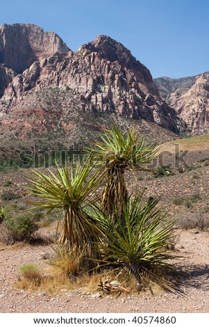 A Joshua Tree at the Red Rock Canyon National Conservation Area in Nevada which is located about west of Las Vegas and showcases large red sandstone peaks and walls.