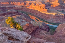 A juniper tree on a ledge in Dead Horse Point lit by early morning light overlooking the Colorado River near Moab, Utah.