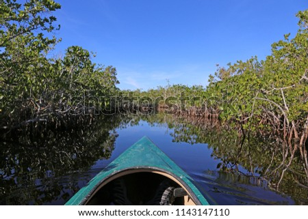 A kayak moving through the mangroves of Everglades National Park, Florida reflecting in a waterway of Hell's bay trail.