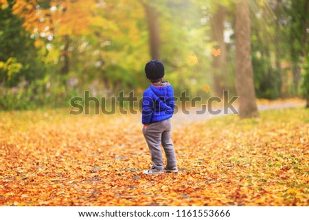 A kid is watching the leaves fall off the trees during the fall season. Alone little boy in the forest enjoys a magical autumn landscape (portrait captured in the back). Boy in golden autumn park.