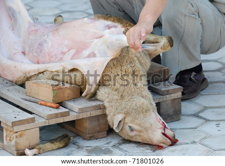 a killed sheep is skinned, mutton is a common food for Mongolian people