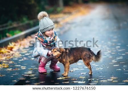 A kind girl feeds a stray dog. Little girl with a kind heart