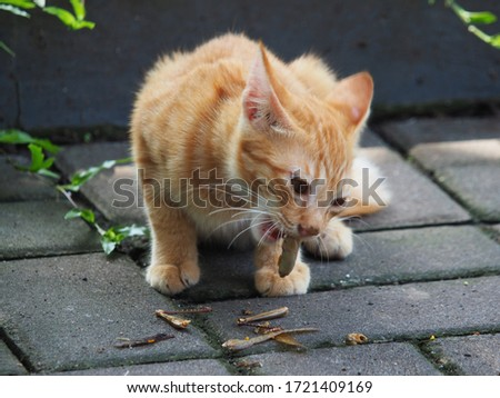 A kitten eats grasshoppers caught in the yard. Stock foto ©