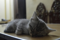 A kitten fall asleep on the desk at home