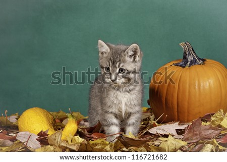 A kitten in a halloween themed studio shoot.