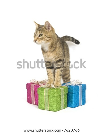 A kitten looks over three gift boxes on a white background