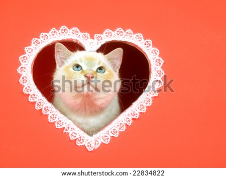 A kitten peeks out of a heart shaped hole cut into a red background for use as valentines day art - stock photo