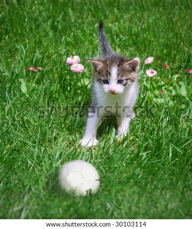 A kitten playing with a ball in the grass.