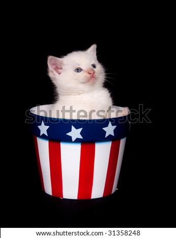 A kitten sits inside a flower pot with Fourth of July colors