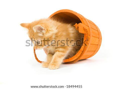 A kitten sits inside of a tipped over orange barrel used as Halloween decorations