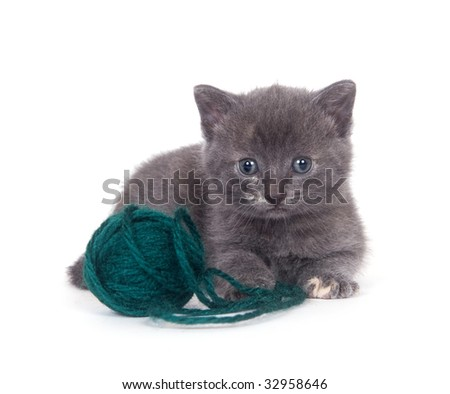 A kitten sits next to a ball of green yarn on a white background