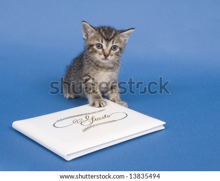 A kitten sits next to a white, wedding guest book on a blue background