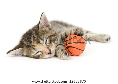 A kitten takes a nap on a white background. One in a series