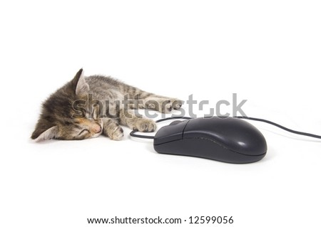 A kitten takes a nap while holding onto a computer mouse on a white background. One in a series