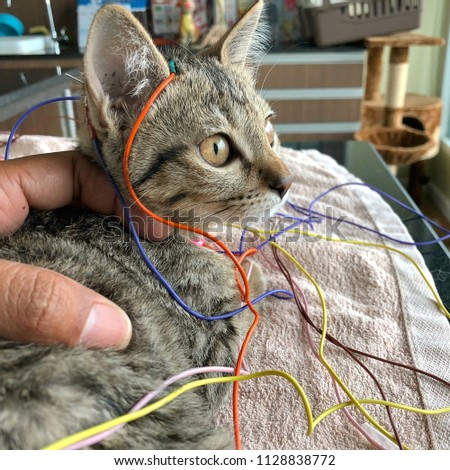 A kitten who treated by Electro Acupuncture. #1128838772