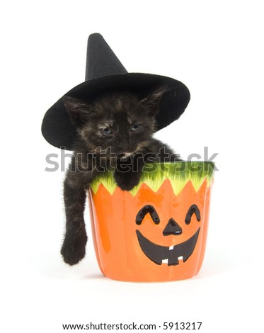 A kitten with a witch hat on its head sits inside of a pumpkin jar on a white background
