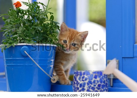 a kitty plays next the window. - stock photo