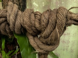 A knotted ship rope in a large tree. Macro climbing white rope tied to a big tree. Rope around tree trunk,rope with knot around tree. Beautiful natural environment.