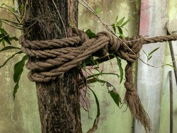 A knotted ship rope in a tree. Macro climbing white rope tied to a big tree. Rope around tree trunk,rope with knot around tree. Beautiful natural environment.