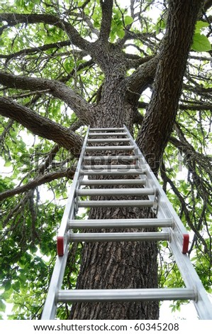 A ladder up against a large tall green tree.