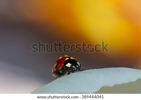 A lady bug has woken up and walking on crocus in the spring sun #389444041