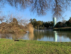 A lake, surrounded with grass. Trees and skyscrapers in the background. The photo is surrounded by a natural frame of bare tree branches