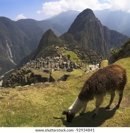 A Lama grazing in a terrace with Machu Picchu and surrounding mountains in the background.