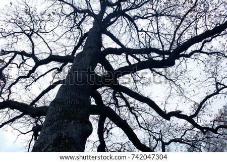 A lame dark tree without leaves with curved twigs on the background of a gray white sky